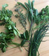 cancer herbs2 - Herbs